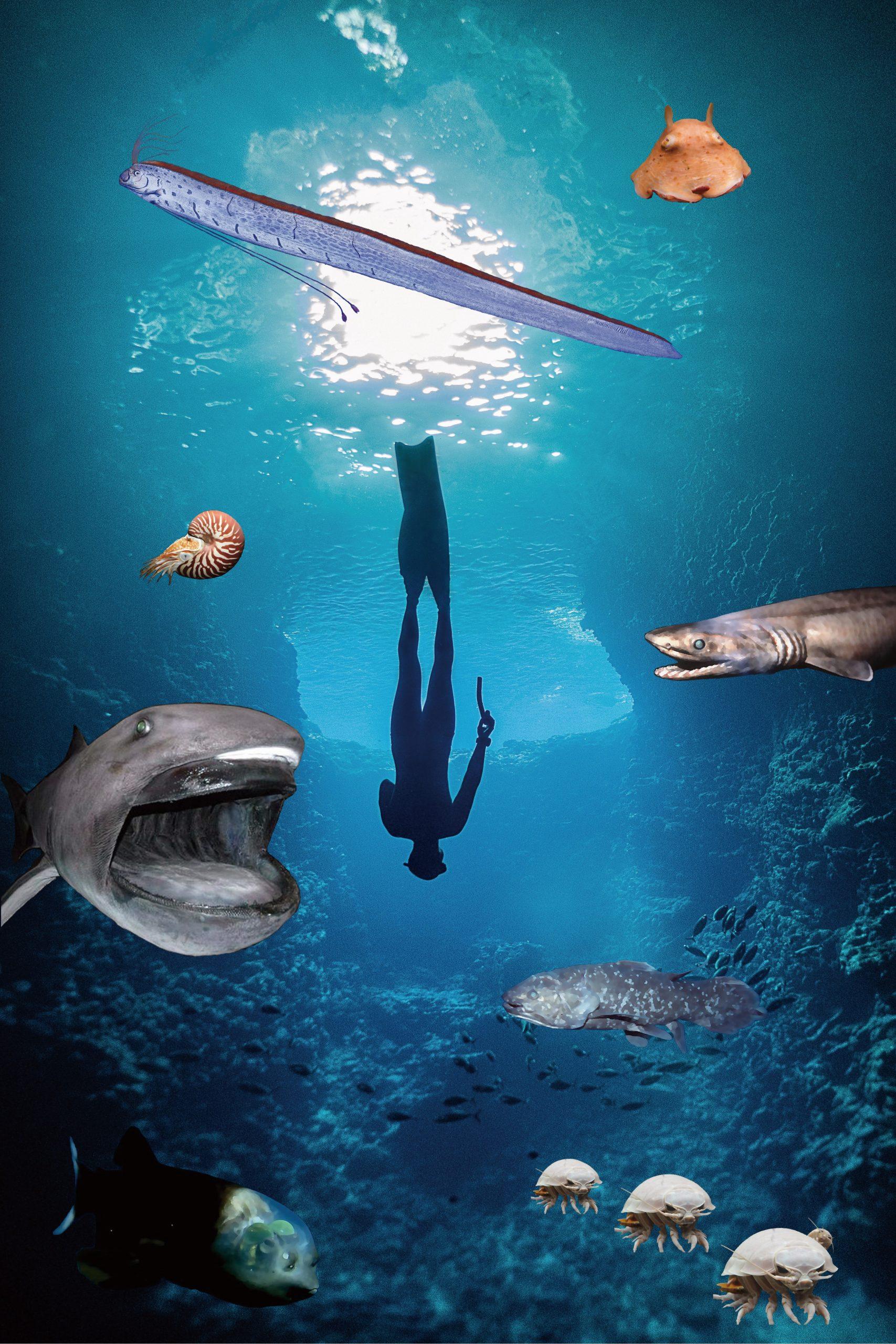深海デザインイメージ